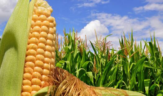 Vi både kan og bør hindre import av genmodifisert mat