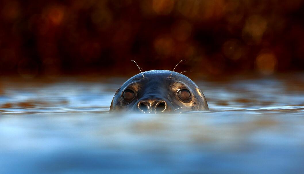 Sammen med selen ned i dypet