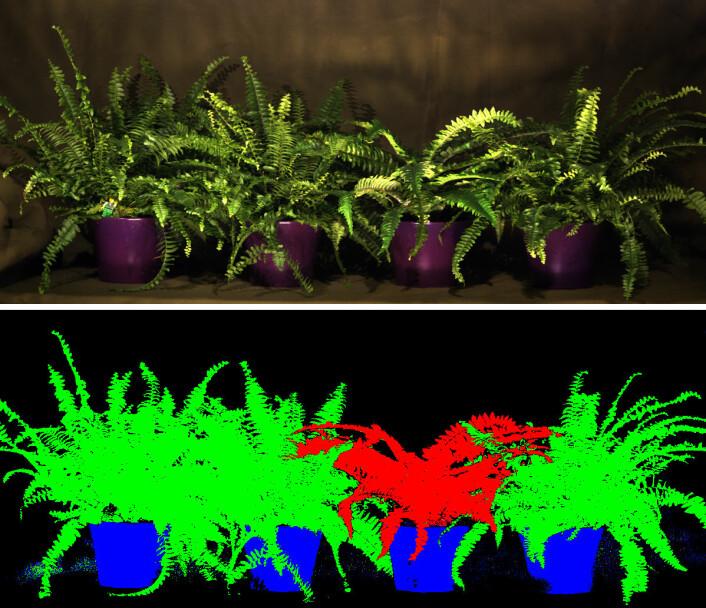 Øverst: Bilde av planter tatt med vanlig kamera. Nederst: Et bilde tatt med hyperspektralt kamera er analysert med data, og forskjellen mellom de ekte (grønne) og den kunstige (røde) planten er framhevet. (Foto: (Bilde: Torbjørn Skauli, FFI))
