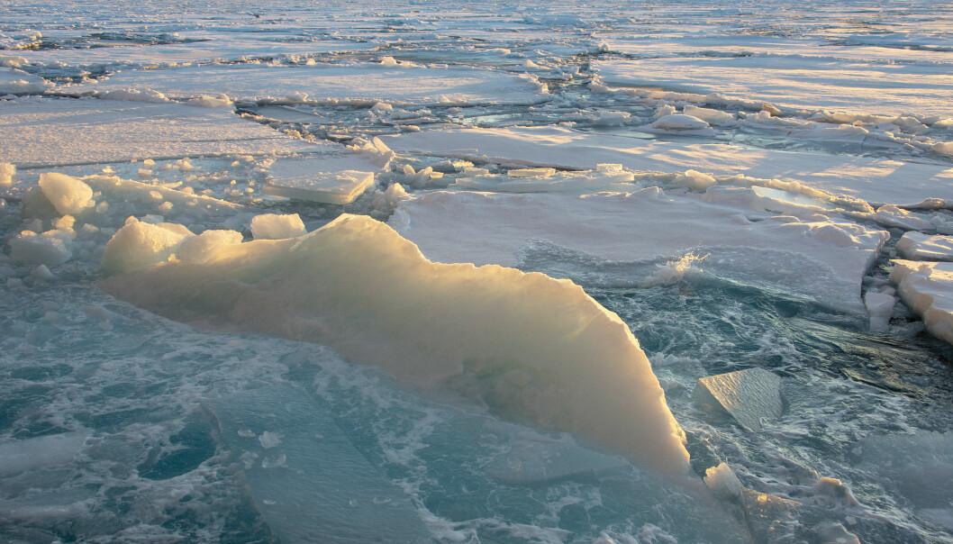 Mens forskningsisbryteren 'Kronprins Haakon' brøyter seg gjennom isen, holder Arven etter Nansen forskerne spent utkikk etter isalger på undersiden av isflakene. (Foto: Rudi J. M. Caeyers, UiT / The Nansen Legacy)