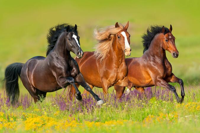 Ville den ene hesten blitt flau om den falt nå? (Foto: Kwadrat / Shutterstock / NTB scanpix)