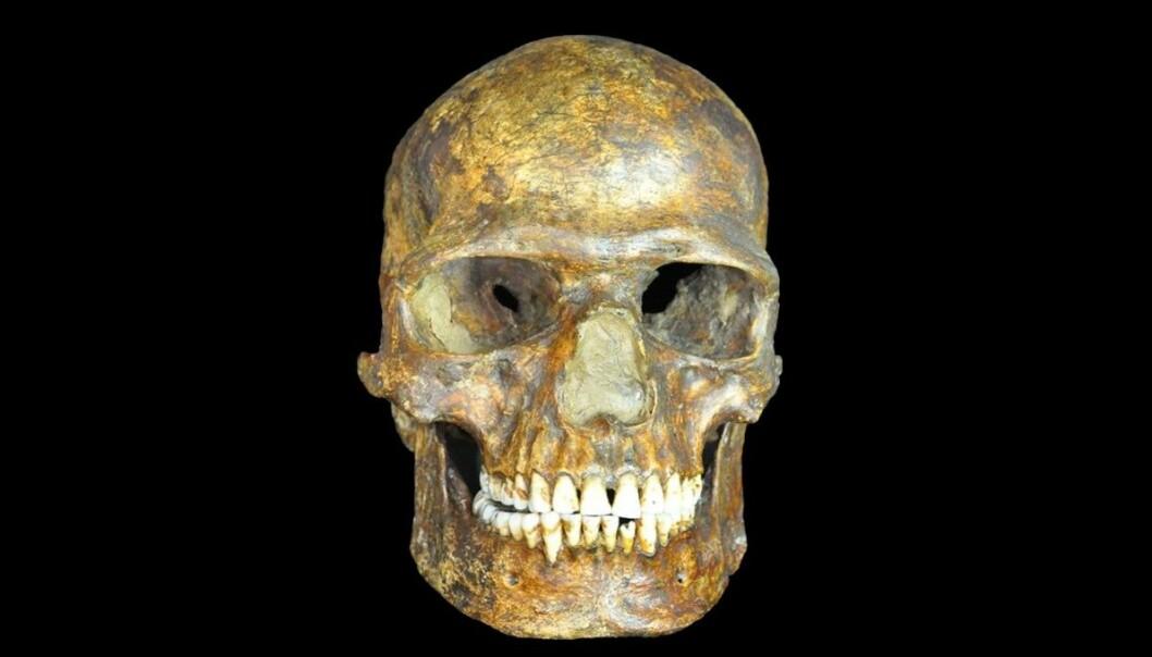 Denne 36 000 år gamle russiske hodeskallen er i slekt med oss. (Foto: Peter The Great Museum)
