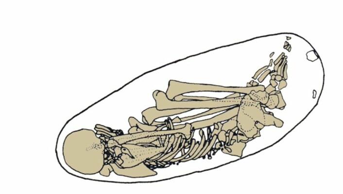 Ei teikning som viser korleis fossilet låg då det vart funne. (Foto: Philip Nigst, University of Cambridge)