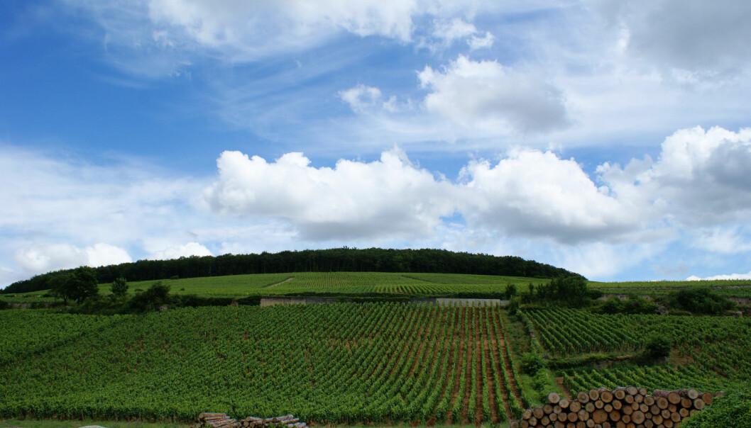 Disse vinmarkene, i nærheten av byen Beaune i Burgund, forteller om klimaendringer, ifølge en gruppe forskere. (Foto: Olivier Duquesne via Flickr / Creative Commons Attribution-ShareAlike 2.0 Generic (CC BY-SA 2.0) Licence)