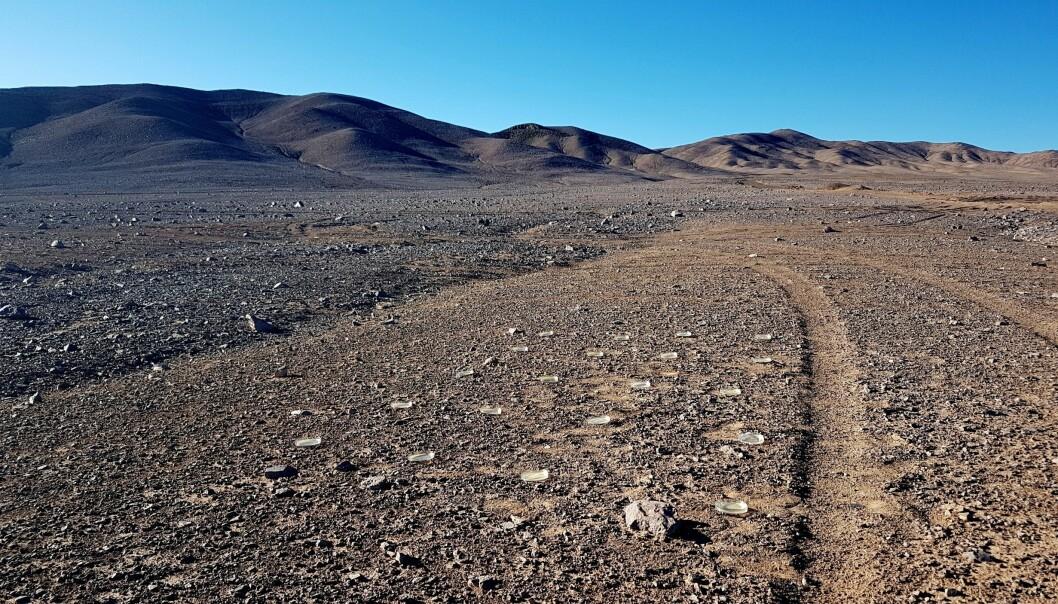 Skåler med næring midt i den ekstremt ugjestmilde kjernen av Atacama-ørkenen. Kommer det noen mikroorganismer som vil vokse i dem? (Foto: Dr. Armando Azua-Bustos)