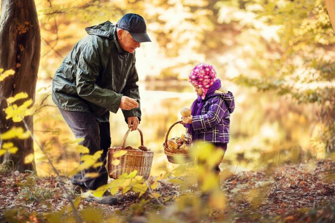 Sjekk deg for flått når du går på soppjakt i skogen. (Foto: Saveliev Dmytro / Shutterstock / NTB scanpix)
