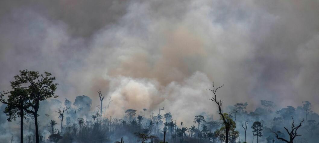 Brasiliansk forsker: – Amazonas' framtid ligger i markedets hender