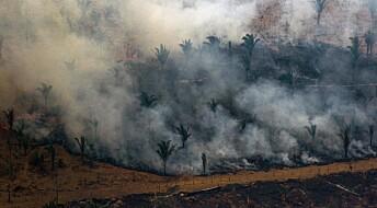 Det er ikke klimaet du trenger å bekymre deg for når regnskogen brenner – det er det biologiske mangfoldet