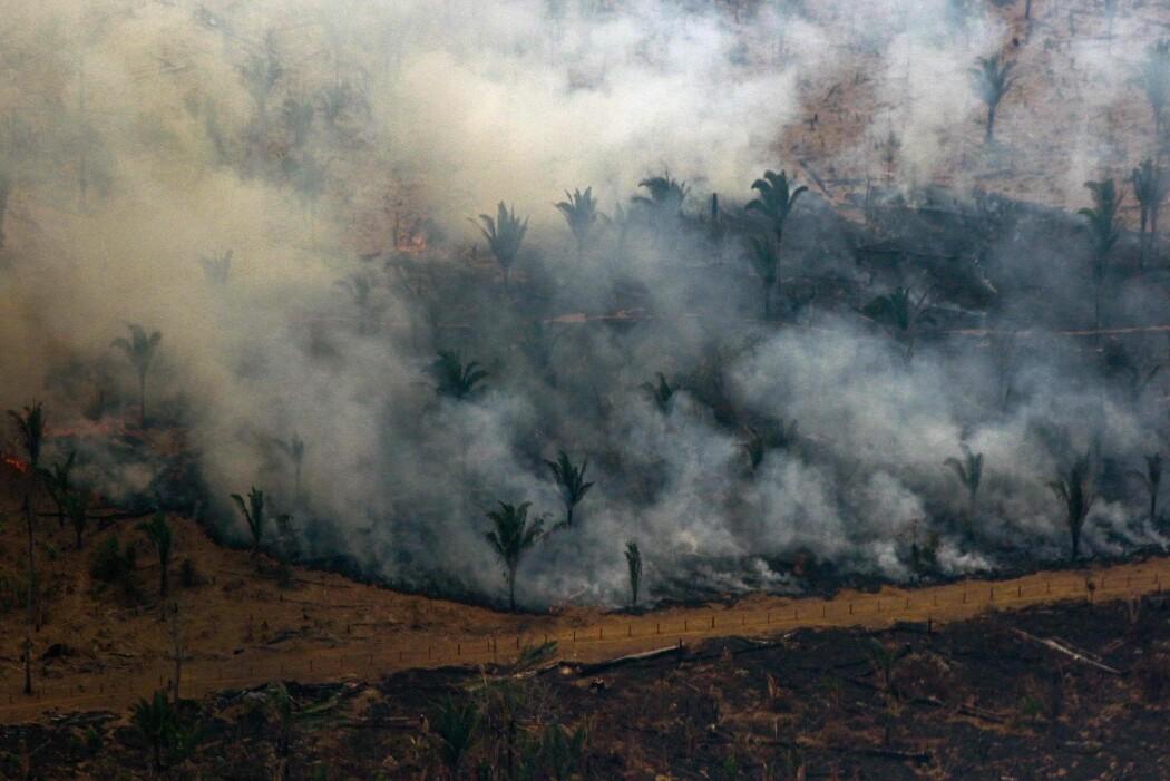 Villet nedhugging – for å gi oss palmeolje, soya, kjøtt, trevirke og ikke minst det påstått «grønne» biodrivstoffet vi ønsker å erstatte oljen med – er en langt, langt større trussel enn brannene i Amazonas, skriver Erik Tunstad. (Foto: Lula Sampaio, AFP, NTB Scanpix)
