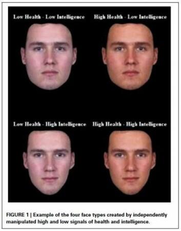 Digital manipulerte portrettbilder av en mann ble vist i ulike varianter, slik at han fremsto som mer eller mindre sunn og intelligent.  (Foto: (Illustrasjonsbilder: Brian R. Spisak))