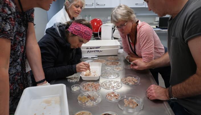 På Arven etter Nansen toktet med FS Kronprins Haakon er forskere fra ulike norske forskningsinstitusjoner samlet. Gruppen av zooplankton spesialister består av sju forskere fra seks forskjellige forskningsinstitutter og universiteter. (Foto: Lis Lindal Jørgensen, HI / The Nansen Legacy)