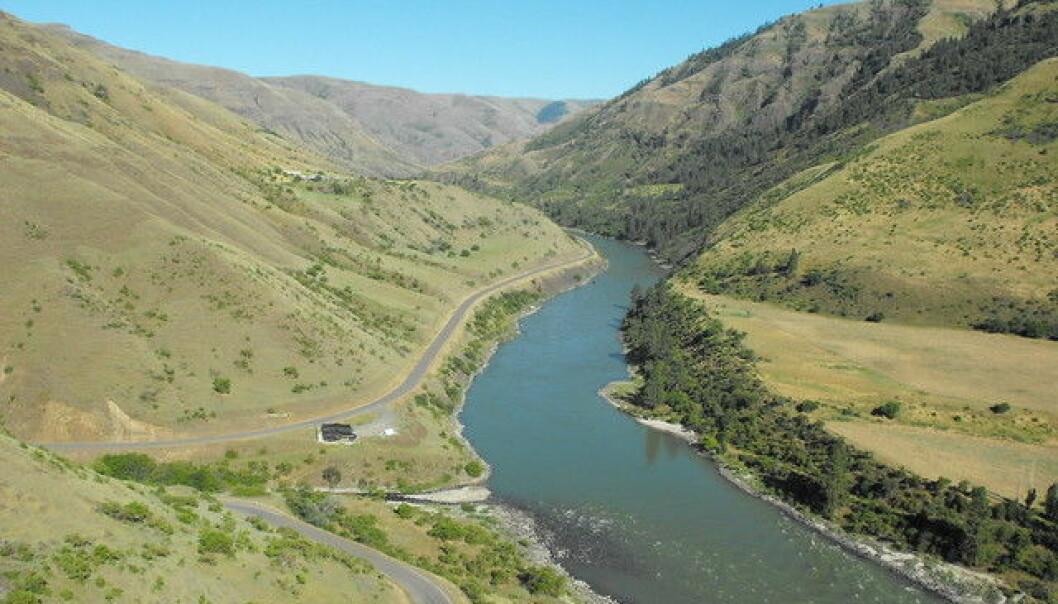 Her, ved denne elven i delstaten Idaho i USA har forskere funnet nye spor etter tidlige mennesker i Amerika. (Foto: Loren Davis).
