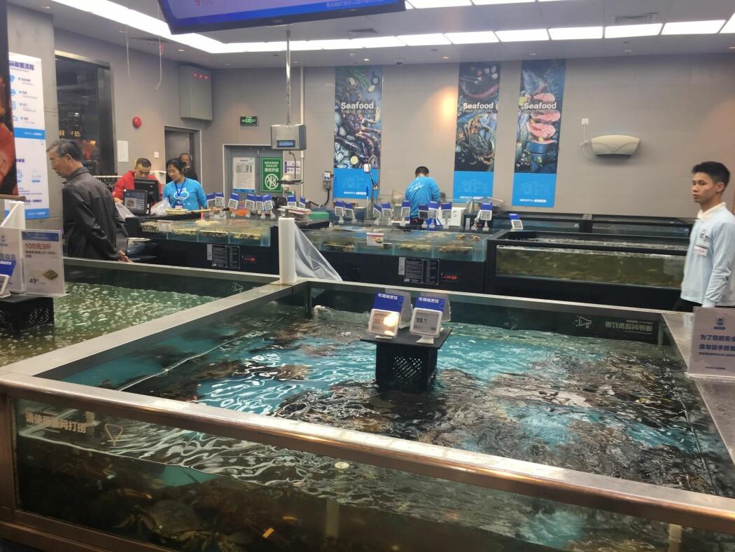 Kineserne kan velge ut den levende sjømaten de vil kjøpe i såkalte showrooms. Deretter bestiller de på nett og får varene levert på døra. (Foto: Gøril Voldnes © Nofima)