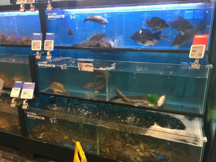 I Kina er det hovedsakelig levende sjømat som gjelder. Er det levende er det ferskt. Etter utvelgelse, leveres varen hjem til kunden. (Foto: Gøril Voldnes © Nofima)