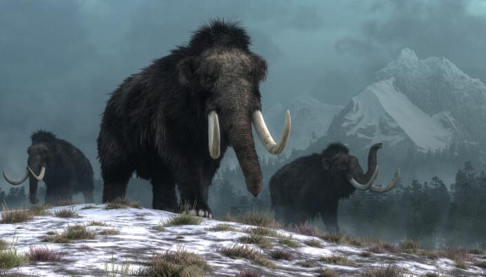 Clovis-folket var egentlig ikke et eget folkeslag, men de brukte samme typer redskaper. Spydene kan ha blitt brukt til jakt på storvilt som mammut og bison. (Illustrasjon: Daniel Eskridge / Shutterstock / NTB scanpix)