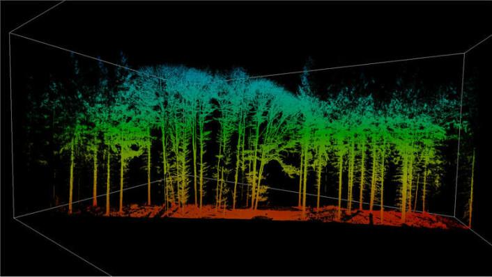 Forskerne ved det tekniske universitetet i München bruker laserskanning for å få et bildet av hvordan økt vekst endrer strukturen på trekronene.  (Foto: G. Schütze / TUM)
