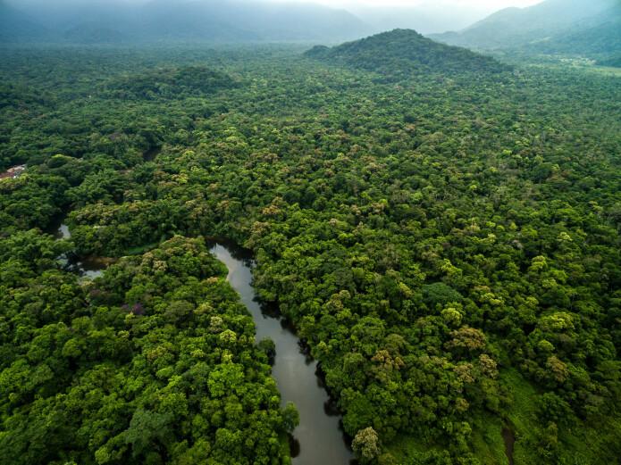 Amazonas er verdens største regnskog og hjemsted for hver tiende art på jorden – fra mer enn 100 000 kjente arter av insekter (samt antagelig flere hundre tusen ukjente) og nesten 40 000 plantearter. (Foto: Gustavo Frazao / Shutterstock / NTB scanpix)