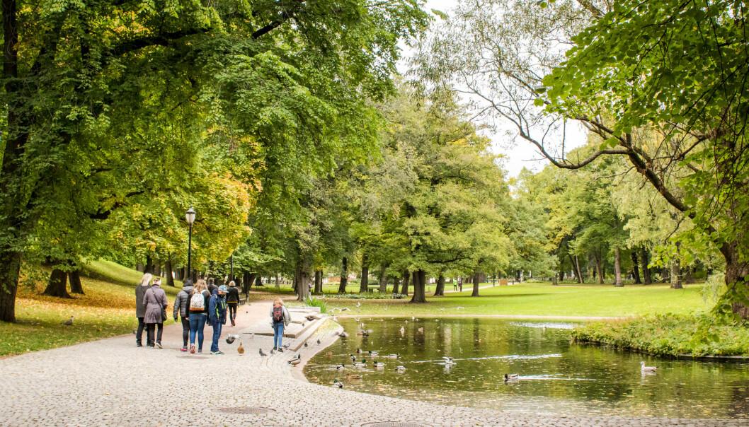 Mye forskning peker mot at grønne områder har positiv innvirkning på helsa. Men det er ikke helt klart hvorfor. (Foto: Antonio Coppola / Shutterstock / NTB scanpix)