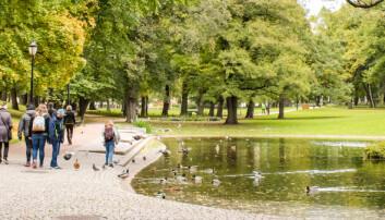 Forskere knytter byparker til bedre mental helse