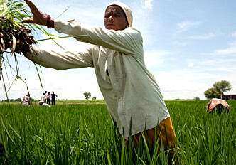 International Women's Day: Closing the gender gap among smallholders