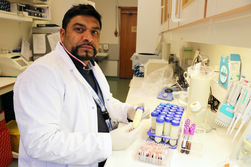 Engineer Faisal Suhel at the Norwegian Veterinary Institute investigates samples of blod and milk for TBE. (Photo: Mari M. Press)