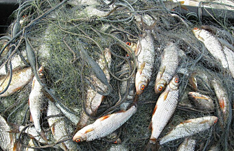 Climate change in the subarctic: warmer lakes pose a danger to cold-water fish populations