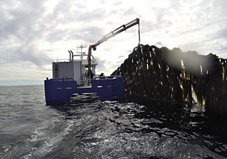 Researcher believes in kelp farming