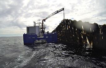 Researcher believes in kelp farming