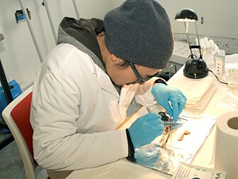 You Song sampling atlantic salmon at FIGARO gamma irradiation facility (Ås, NMBU). The fish experiment was approved by the National Animal Research Authority (NARA). Dr. Song is certified (FELASA C) for conducting laboratory animal tests with appropriate animal welfare considerations. (Photo: B. O. Rosseland)
