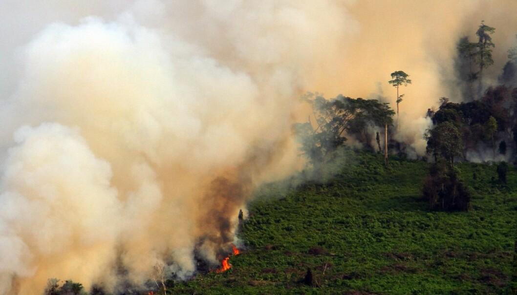 Tett røyk stiger opp fra brennende torvmyrer i Riau-provinsen i Indonesia tidligere i år. (Foto: NTB Scanpix)