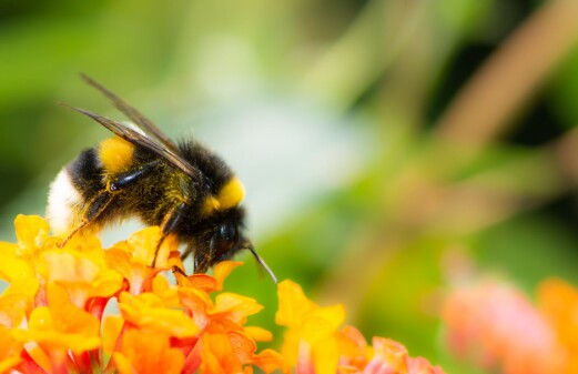 How you can help the insect world