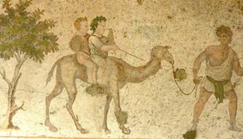 Forskerne vet foreløpig lite om barns liv i det gamle Egypt. Men ved å se på papyrer, potteskår, leker og andre gjenstander forsøker de å danne seg et bilde av hvordan barn levde på denne tiden. Her er en mosaikk fra senantikken, tidlig 6. århundre e.Kr. Bildet heter Gutter på Camel, og henger i Great Palace Mosaic Museum i Istanbul.  (Foto: Reidar Aasgaard)