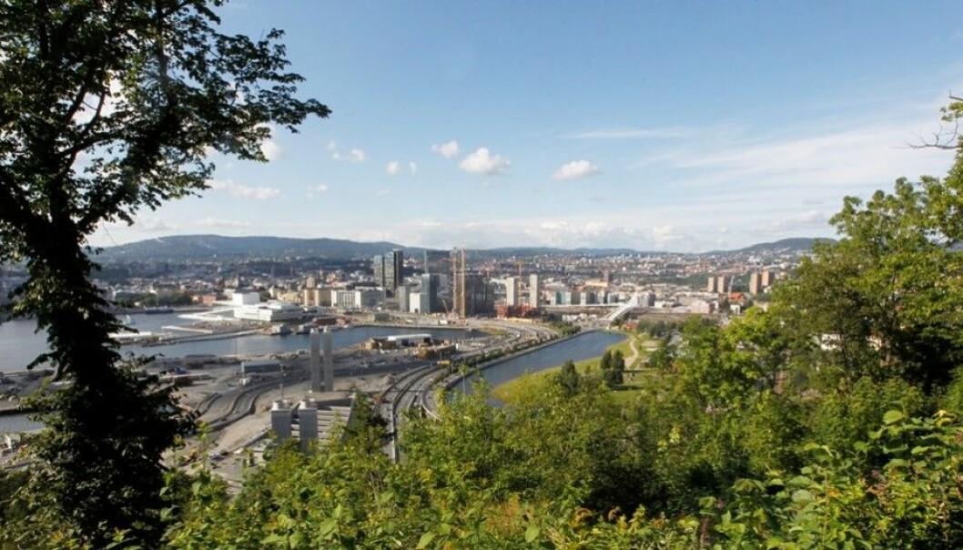 Hvordan unngår vi å utrydde sårbare arter og naturtyper? spør kronikkforfatteren. Her fra Ekebergskrenten i Oslo, som er et av de stedene i Oslo med mest biologisk mangfold. (Foto: Morten Holm / Scanpix)