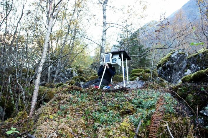 Også nede fra skogkanten fotograferes fjellsiden. (Foto: Freddy Yugsi Molina, NGU)