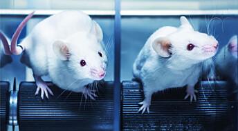 Å trene på noe nytt kan hjelpe mot nikotinavhengighet, ifølge ny rottestudie