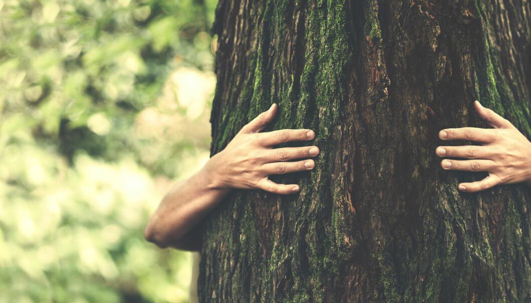 – De tarmvennlige karbohydratene xylan og mannan kan produseres fra lokale trær istedenfor å bruke eksotiske og importerte råvarer, hevder forskere. (Illustrasjon: frankie's / Shutterstock / NTB scanpix)