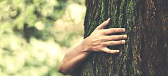 Å spise karbohydrater fra trær kan være godt for tarmen