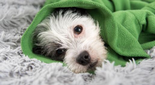 Eksperter vil ikke spekulere om hundedødsfall