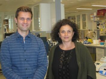 Postdoktor Thomas Fleischer og professor Vessela Kristensen forsker på nye markører for å stille bedre diagnose og prognose for brystkreft.  (Foto: Marianne Frøyland, Kreftforeningen)