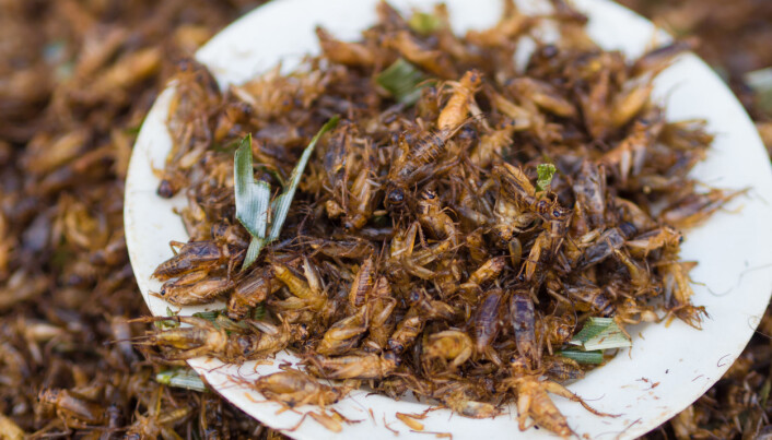 Ølet ditt inneholder hundrevis av insekter