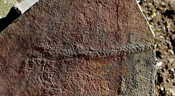 27 centimeter lange marker ålte seg rundt på havbunnen før livet skjøt fart