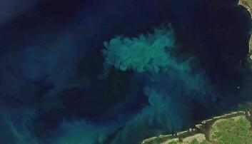 Mørkere vann forsinker algenes årlige vårfest i Nordsjøen