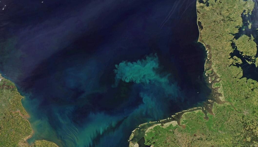 Vakkert vårtegn: Satellittfoto av planktonoppblomstring i Nordsjøen våren 2018. (Foto: NASA Earth Observatory)