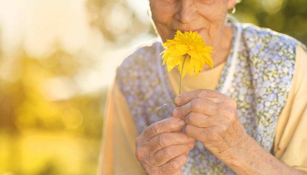 Luktenerven er den eneste delen av menneskets nervesystem som kontinuerlig fornyer seg selv. Produksjonen av nye lufteceller avtar med alderen. (Foto: Microstock)