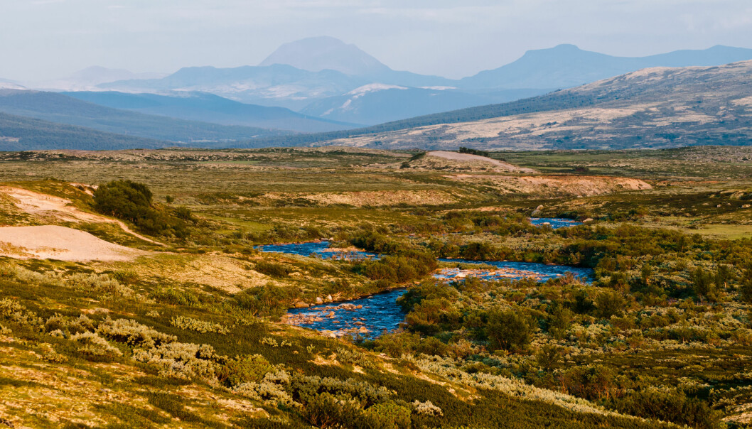 Et sted å fiske, se villrein eller få være helt for seg selv: Hvordan kommer nordmenn til å bruke fjellheimen i fremtiden? (Illustrasjon: Kurkul / Shutterstock / NTB scanpix)