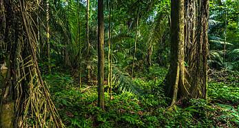 Paranøttene trenger Amazonas