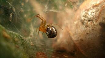 Edderkopper deler på arbeids-oppgavene
