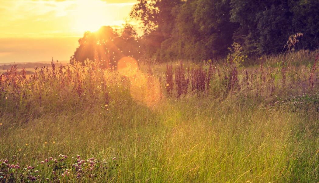 Tyskland legger frem ambisiøs plan for å bevare insekter