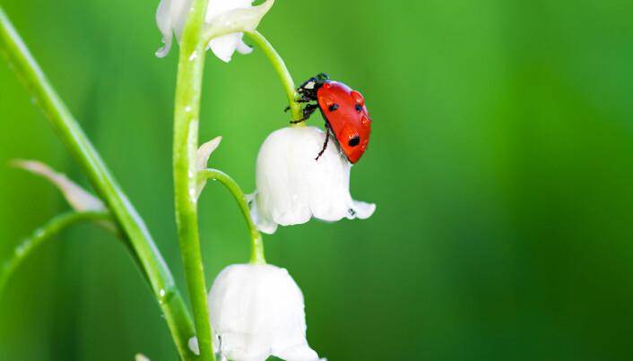 En studie fra 2017 tyder på at insektene har vært i sterk tilbakegang i Tyskland. (Foto: yanikap / Shutterstock / NTB scanpix)