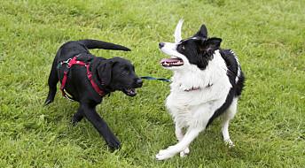 Et nytt helseregister for dyr innføres
